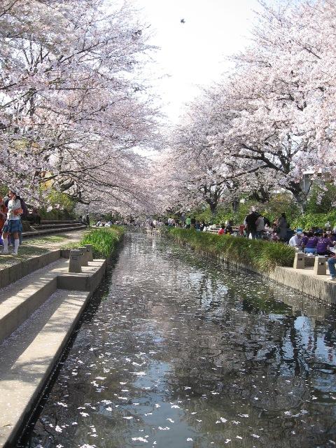 吹上桜祭り0952.JPG